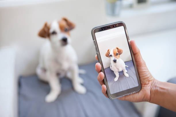 nieuwsgierig hond op een telefoon scherm - foto stockfoto's en -beelden