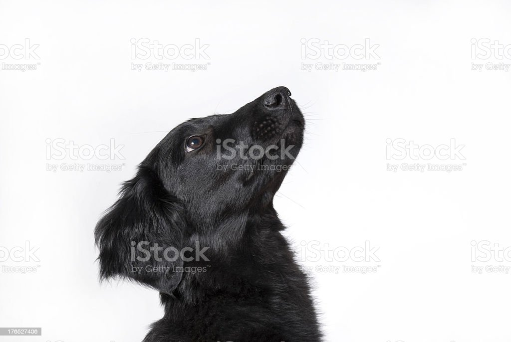 curious dog stock photo
