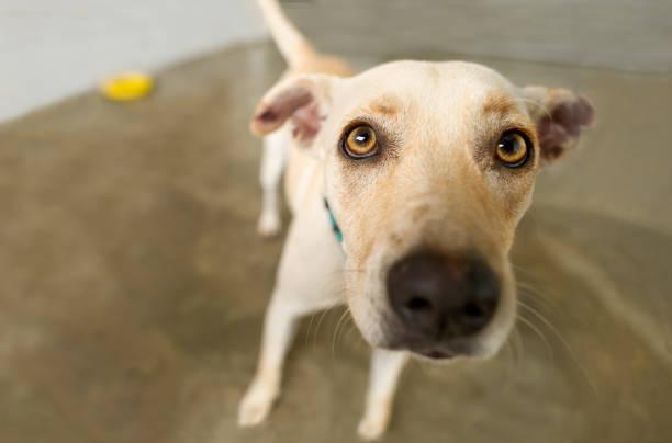 neugierig hund - hunde aus dem tierheim stock-fotos und bilder