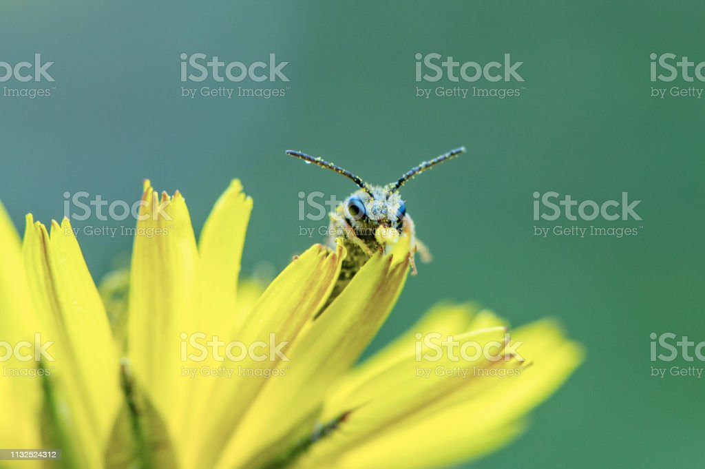 Curious face to face with an insect stock photo