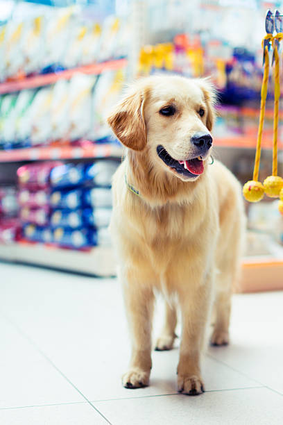 curious golden retrier in pet store - pet shop and dogs not cats stock pictures, royalty-free photos & images
