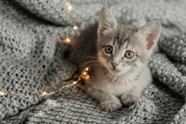 Curious gray kitten sitting on a bed and looking at the camera the picture id1027009854?b=1&k=6&m=1027009854&s=612x612&w=0&h=llo5oufucqzrsvah2pkg5vuj0veqjokh5ufoymbpzhe=