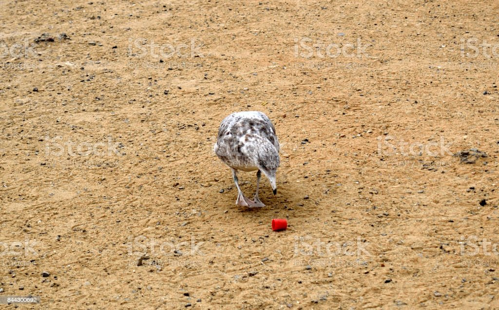 A Curious Gull stock photo