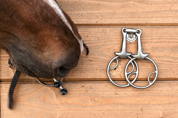 curious horse nose touching metal spurs hanging on wooden wall - horse bit stock photos and pictures