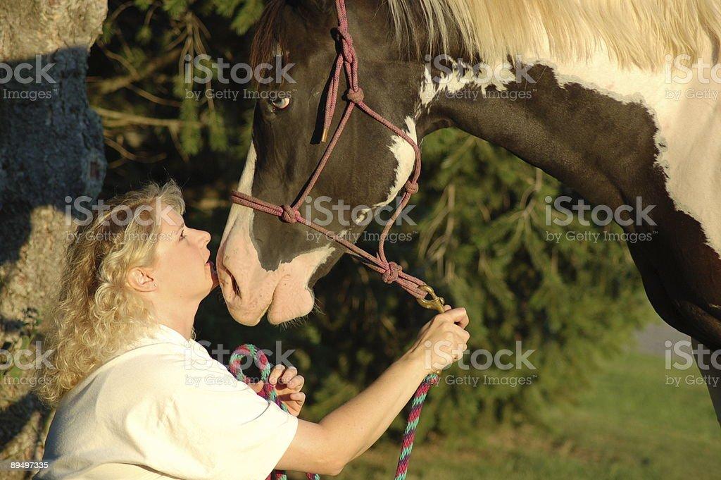 Ciekawski Horse zbiór zdjęć royalty-free