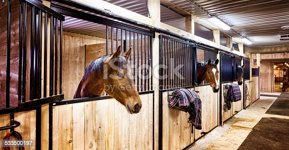 Curious horses in indoors stall at stables. Letterbox composition.