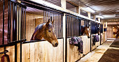 Curious horses in indoors stall at stables