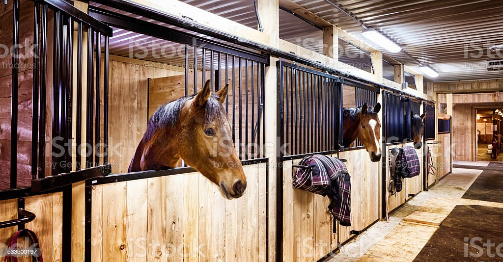 Curious horses in indoors stall at stables stock photo
