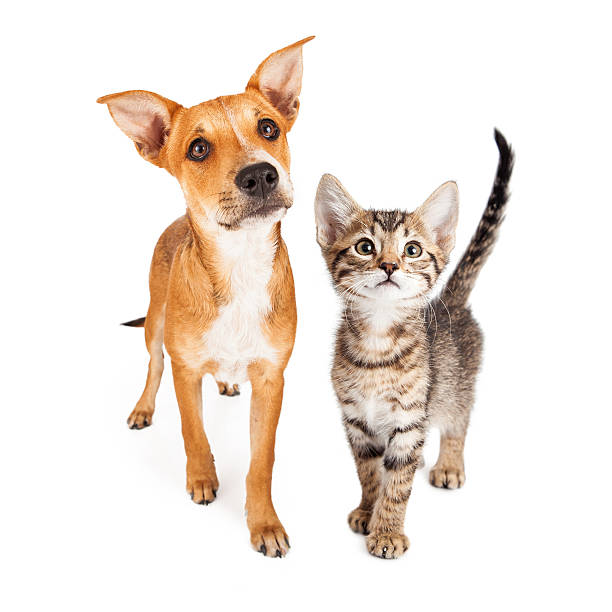 Curious kitten and puppy walking forward picture id543462782?b=1&k=6&m=543462782&s=612x612&w=0&h=3 tdl4ww9ww4e3h8s t56rgvaru5g35zlttt99wth40=