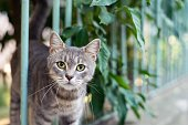 istock Curious kitten looking at the camera 1270023880
