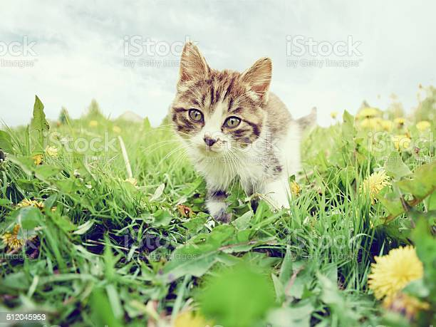 Curious kitten on the grass picture id512045953?b=1&k=6&m=512045953&s=612x612&h=6zplhn7gaupfycbfpshlgzu  hm0wm5f7cwt2heyhhy=
