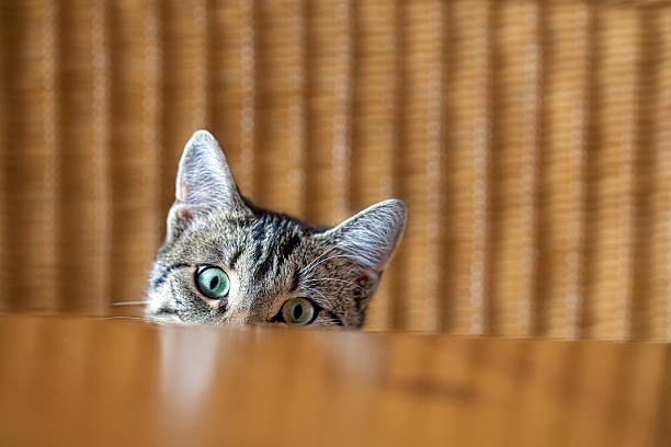 neugierige katzenjunges - suche katze stock-fotos und bilder