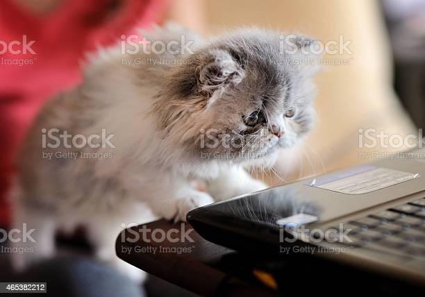 Curious kitten picture id465382212?b=1&k=6&m=465382212&s=612x612&h=7waeydd8206s86bap7x2fsicl7mtwhv6wmifqhy8uki=