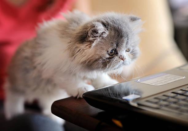 Curious kitten picture id465382212?b=1&k=6&m=465382212&s=612x612&w=0&h=wlehnavrzx14zx3ts8yfxngf sj0ppqsisy lbd8zee=