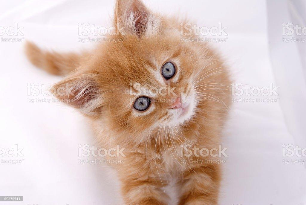 Neugierige Katzenjunges Lizenzfreies stock-foto