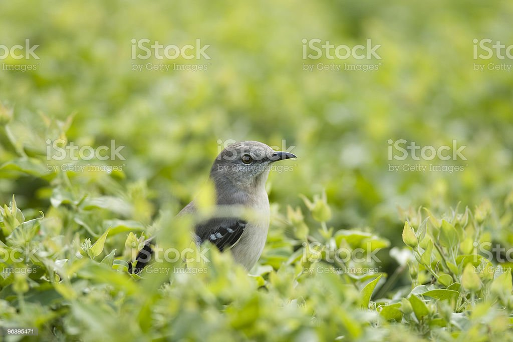 Curious little bird surrounded by green leaves royalty-free stock photo