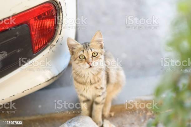 Curious little cat looking at the camera closeup of a cute young mix picture id1178957833?b=1&k=6&m=1178957833&s=612x612&h=boa cdj9cyzammultz00qquhwebwe7csm 8tee6ng1g=