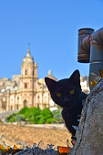 A cat on the roofs of old houses in Sicily