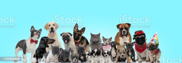 Curious looking cats and dogs of different breeds picture id1200690831?b=1&k=6&m=1200690831&s=612x612&h=25pwhki ng7azwcczuyz v41110jwggodl8w 8cgac0=