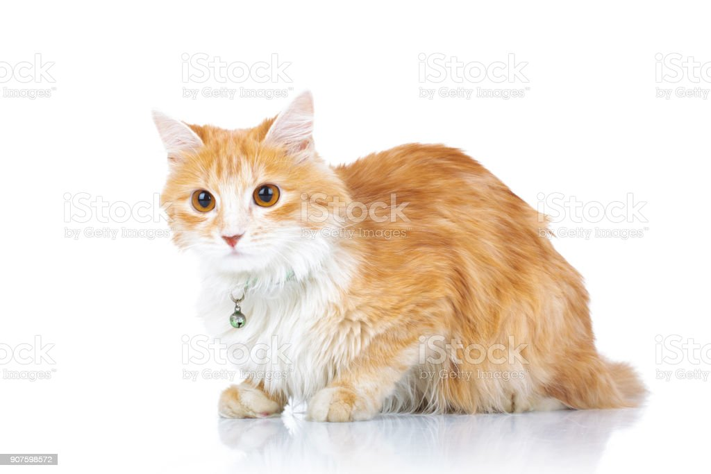 curious orange cat laying down stock photo