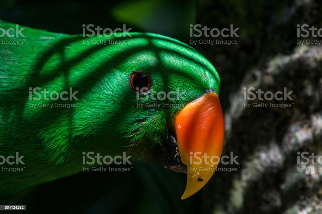 Curious Parrot royalty-free stock photo