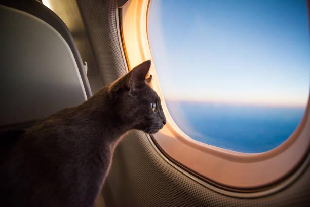 Curious passenger stock photo