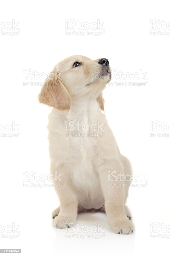 A curious puppy looking to the side stock photo