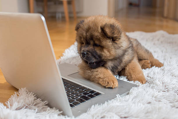 Curious puppy lying on the floor and looking at laptop picture id538354162?b=1&k=6&m=538354162&s=612x612&w=0&h=ep5gcpkvn4 5jc r753 6owj2iydbtzg6th5ohqacce=