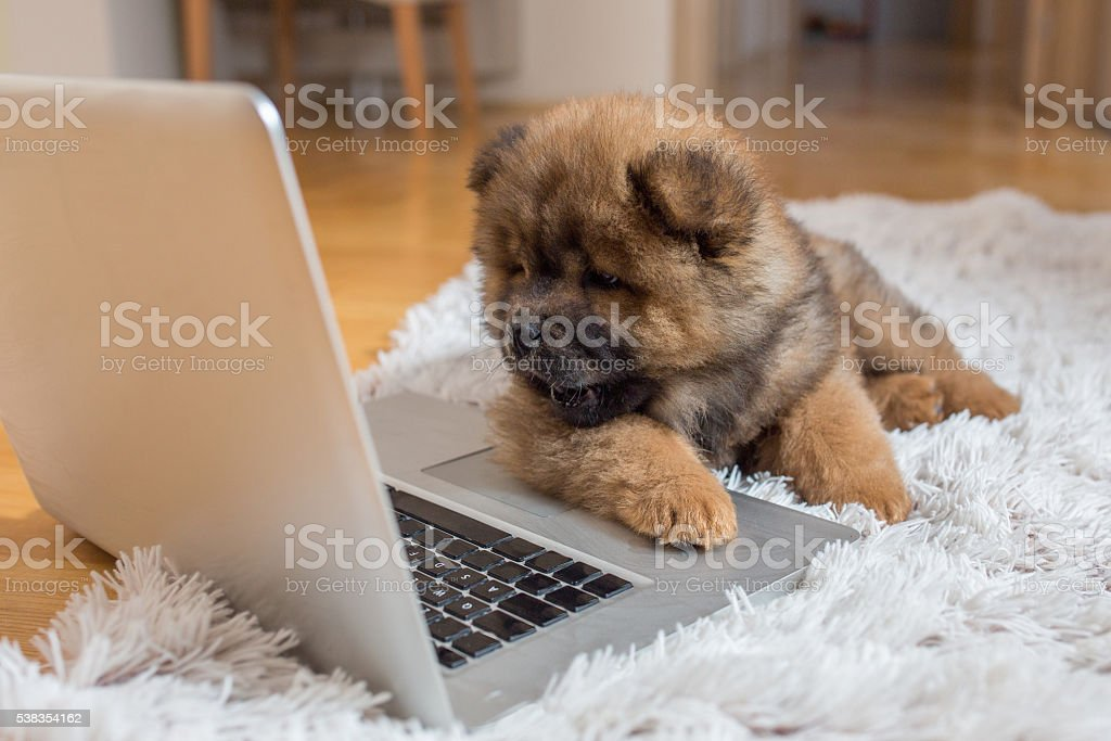 Curious puppy lying on the floor and looking at laptop. stock photo