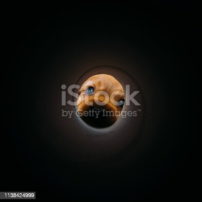 istock Curious Puppy 1138424999