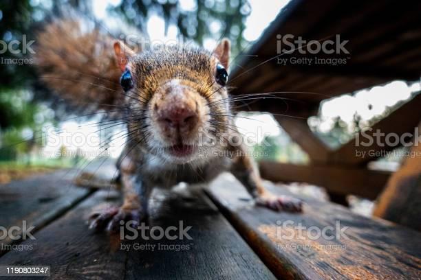Photo of Curious squirrel