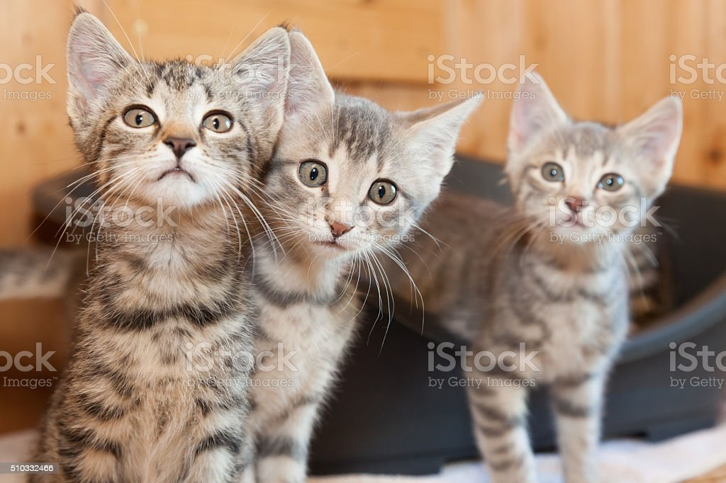 curious tabby cat group stock photo