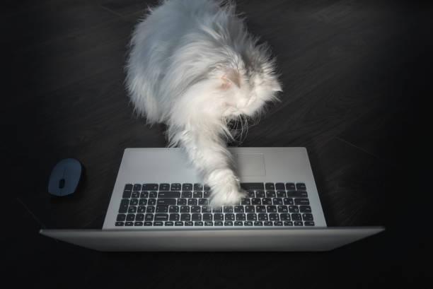 neugierig weiße perserkatze versucht, einen laptop zu verwenden - suche katze stock-fotos und bilder