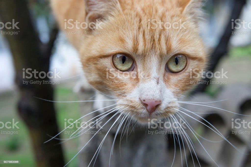 Curious yellow cat stock photo