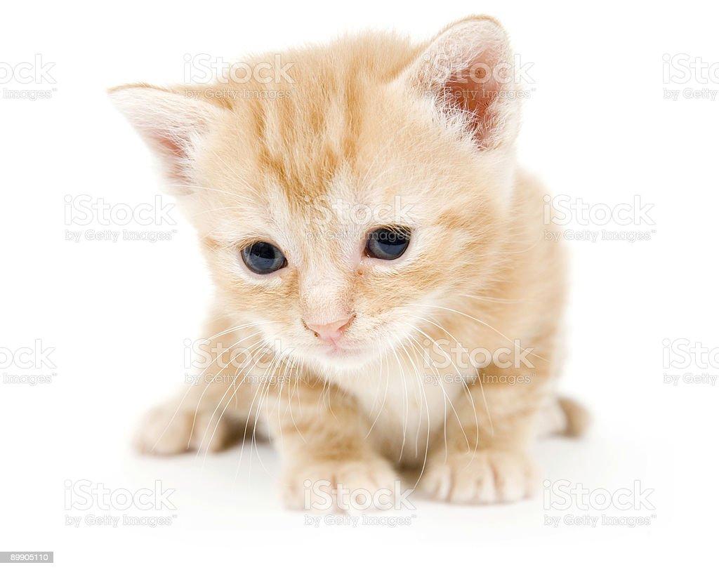 Любознательный желтый kitten Стоковые фото Стоковая фотография