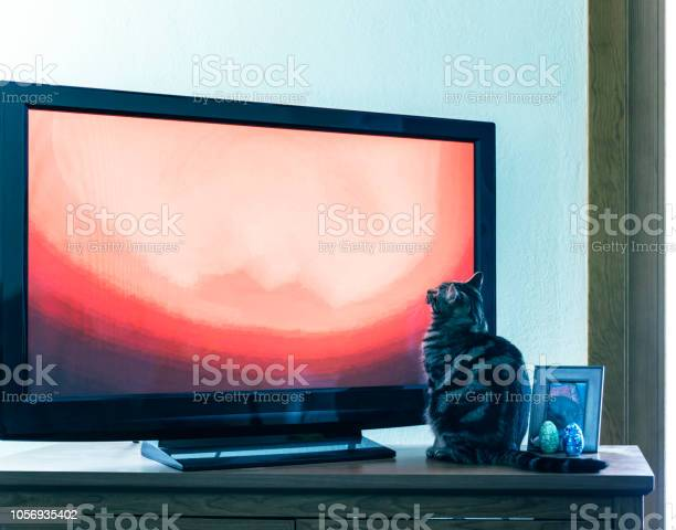 Curious young cat sitting watching television picture id1056935402?b=1&k=6&m=1056935402&s=612x612&h= wf9rdja auwtms6wap8mvhcbyczvdnkyfzh8giunz8=