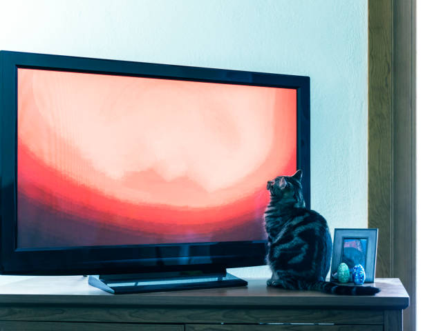 Curious young cat sitting watching television picture id1056935402?b=1&k=6&m=1056935402&s=612x612&w=0&h=6uym kyyoykdu7yovvciwyqdinny2crvirib4mbxjaq=