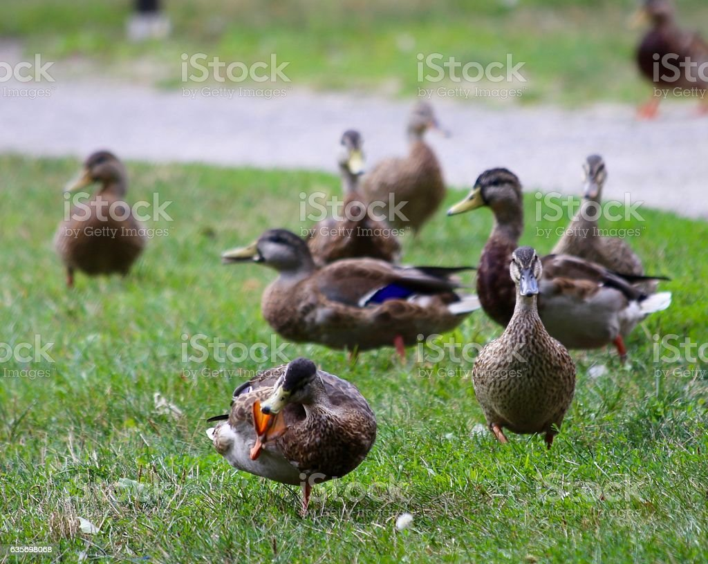 Curiouser and Curiouser royalty-free stock photo