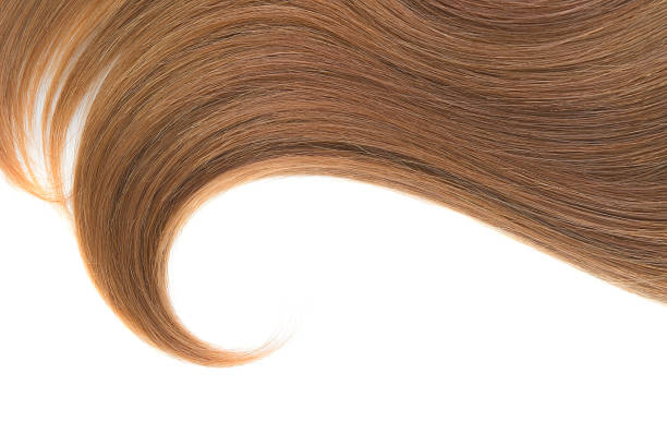 Curl of natural hair on a white background Brown ponytail isolated on white highlights hair stock pictures, royalty-free photos & images