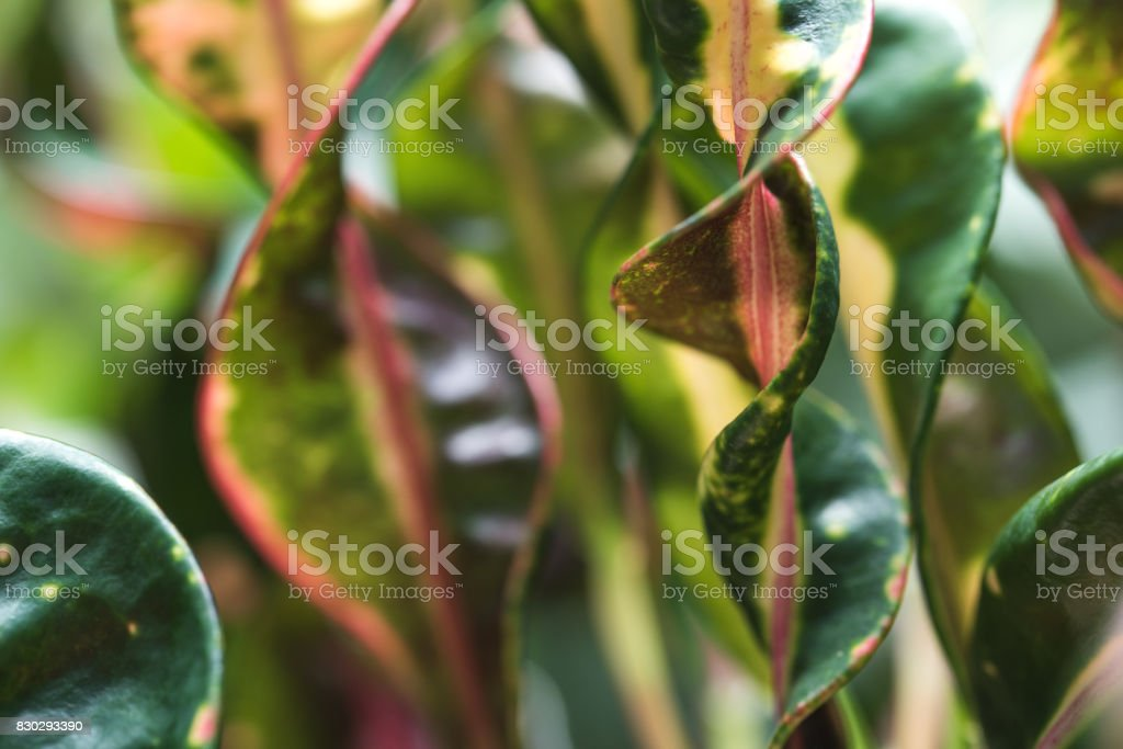 Curled leaves stock photo