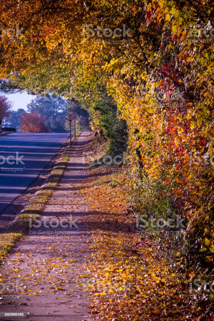 Curling Wave of Fall Color stock photo