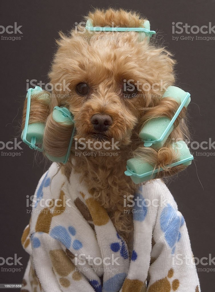 Curly Dog stock photo