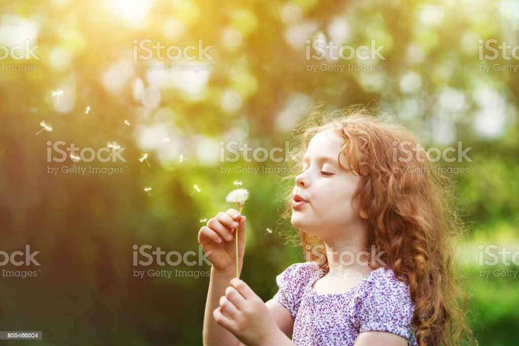 Curly girl blowing white dandelion in meadow. stock photo
