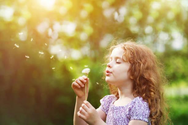 곱슬 소녀 초원에 하얀 민들레를 불어입니다. - 불기 뉴스 사진 이미지