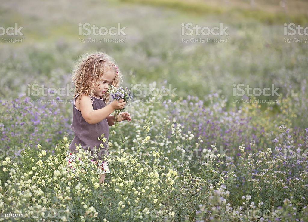 Curly Haired Little Girl Picking Wildflowers stock photo
