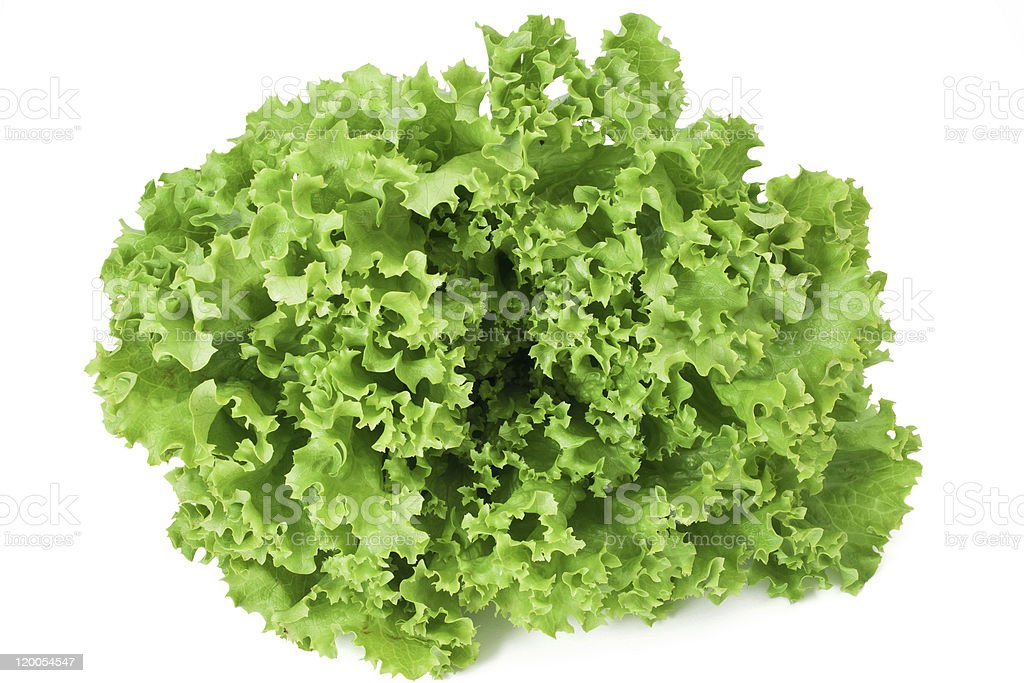 curly lettuce stock photo