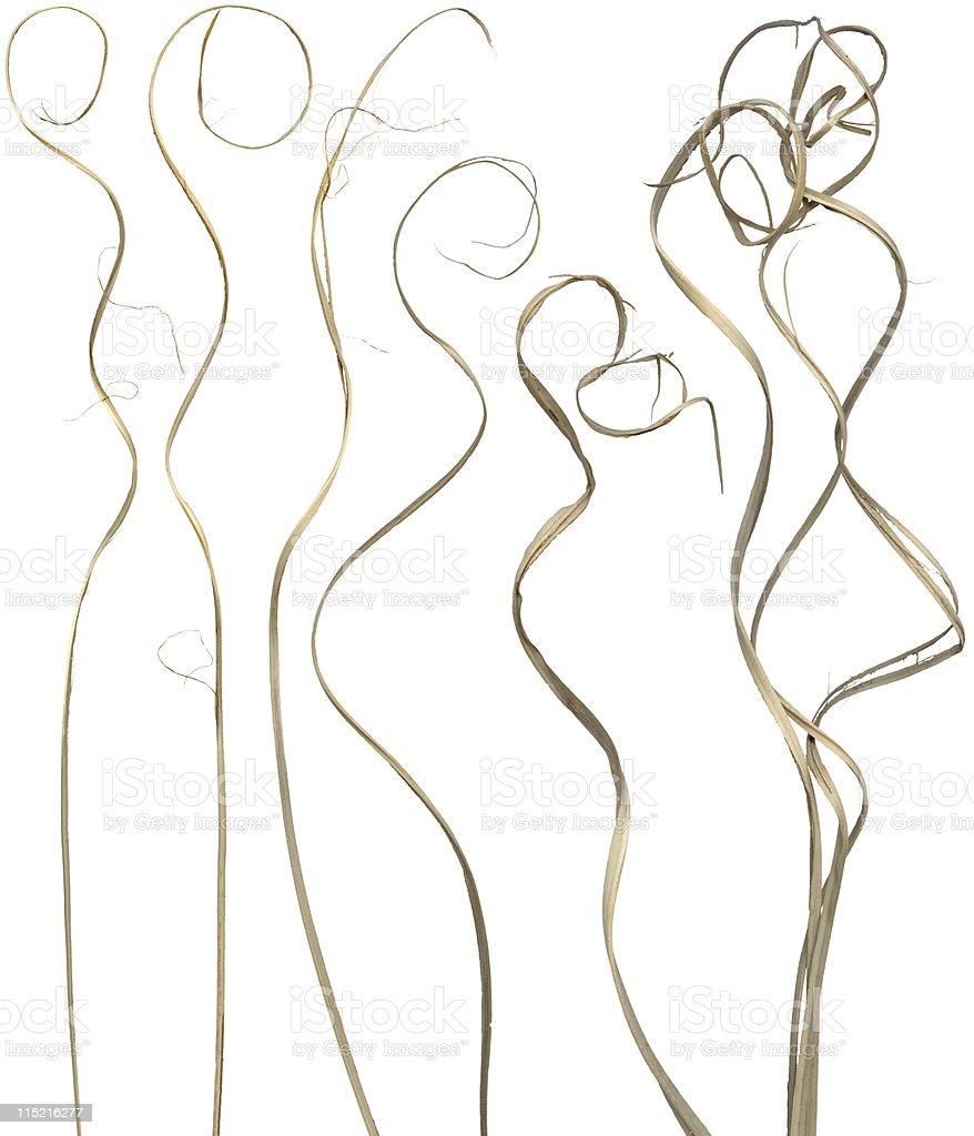 Curly Sticks royalty-free stock photo