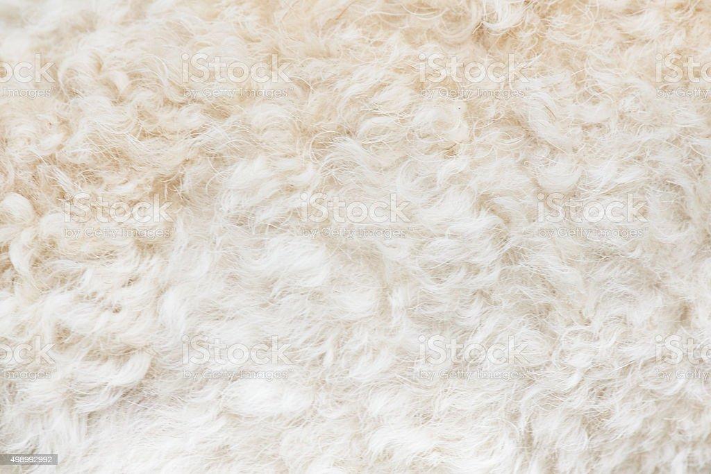 Curly white Poodle dog hair background stock photo