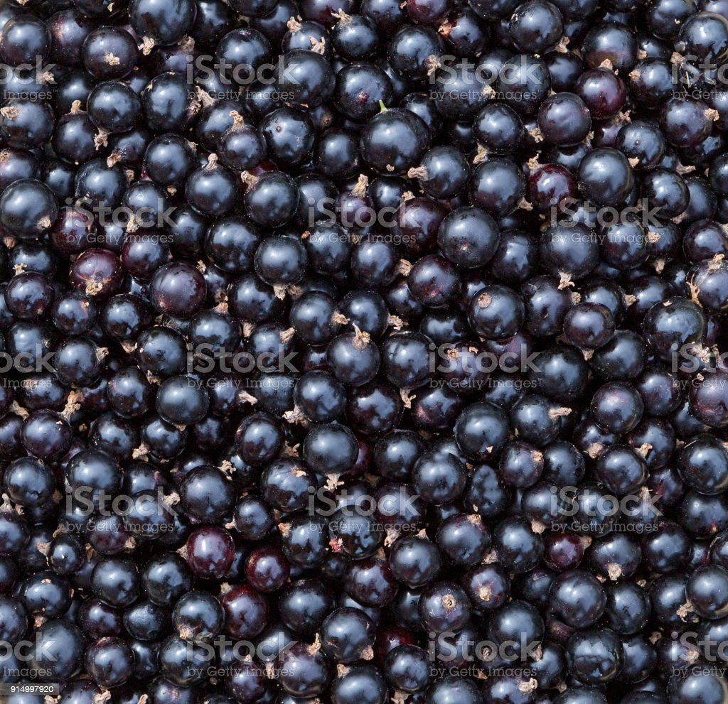 Currant Black Berries Background Fresh Texture Royalty Free Stock Photo