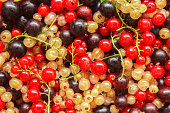 Ripe currant is scattered as a background